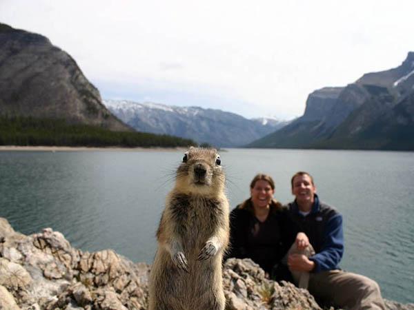 1-squirrel-photobomb-jpg