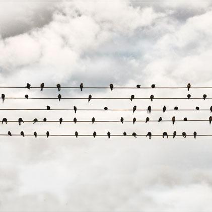 musica-e-uccelli-il-connubbio-perfetto_music-coast-to-coast