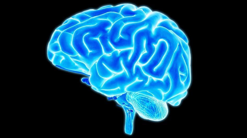 brain-jpg-adapt-945-1