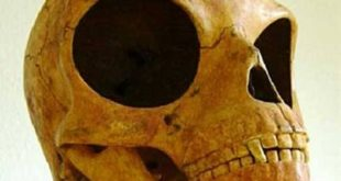 Amazing news new alien skull discovered in Denmark