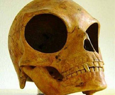Amazing news new alien skull discovered in Denmark